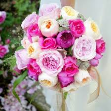 Petals & Flowers