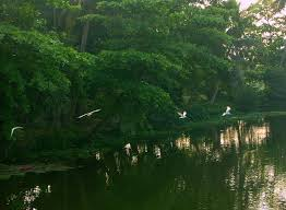 Attidiya Bird Sanctuary
