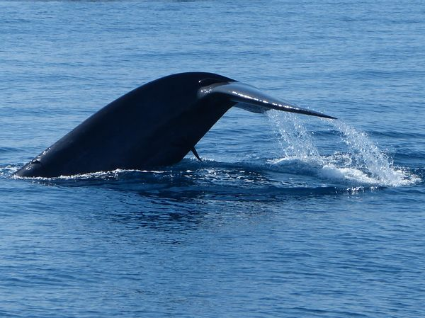 Whales and Dolphin spotting in Mirissa