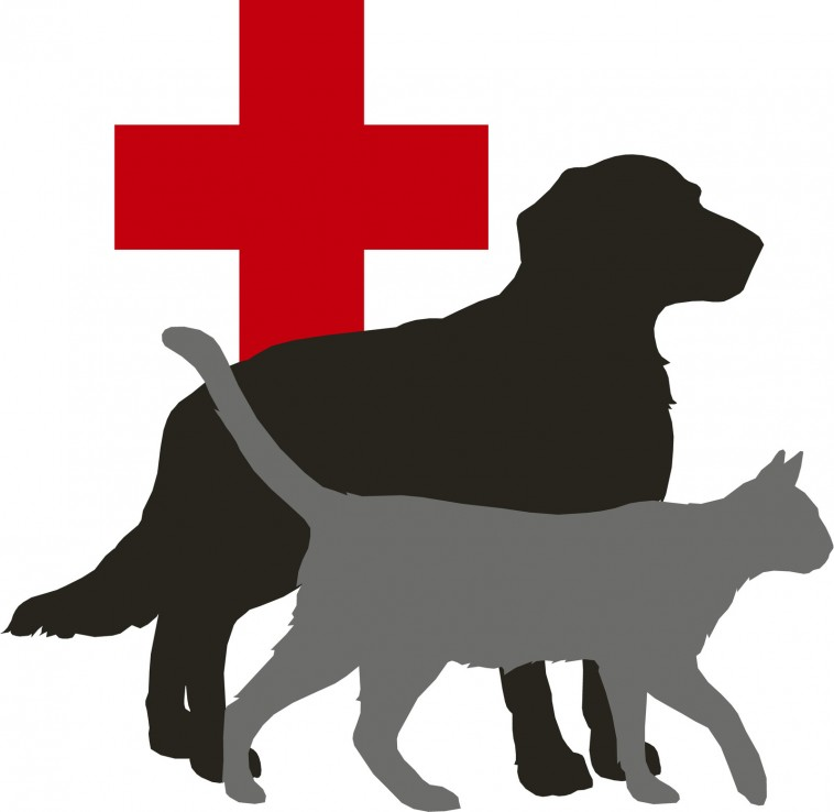 beLOVEd Animal Hospital