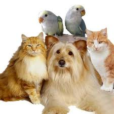 House of Pet Animal Hospital