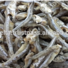 Sun DRIED ANCHOVY Fish