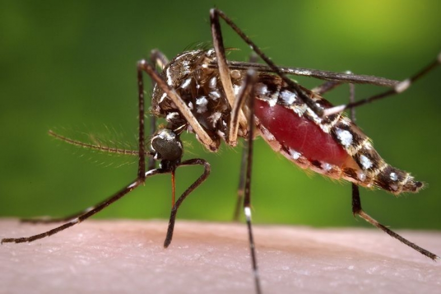 The new behavior of Dengue
