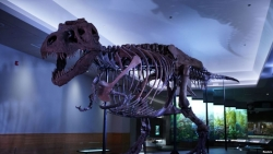 World-Famous T.Rex Sue Gets New Lair in Chicago